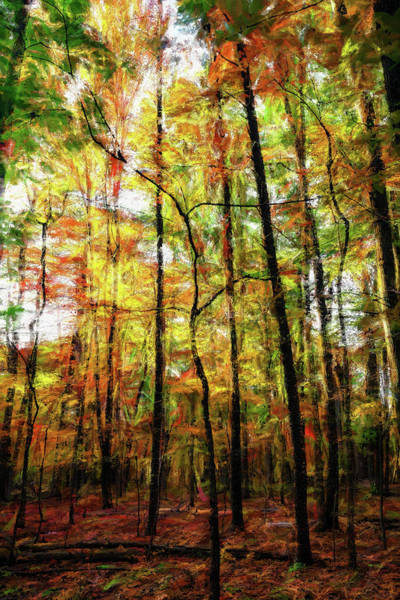 Wall Art - Painting - Tall Fall Trees In The Blue Ridge Ap by Dan Carmichael
