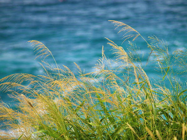 Photograph - Tall Grass Against A Blue Ocean by Christopher Johnson