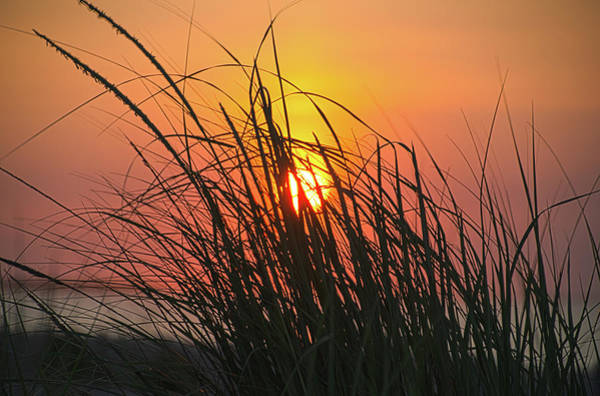 Wall Art - Photograph - Tall Grass At The Beach Sunrise by Bill Cannon