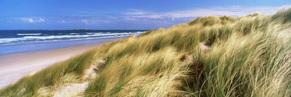 Wall Art - Photograph - Tall Grass On The Beach, Bamburgh by Panoramic Images