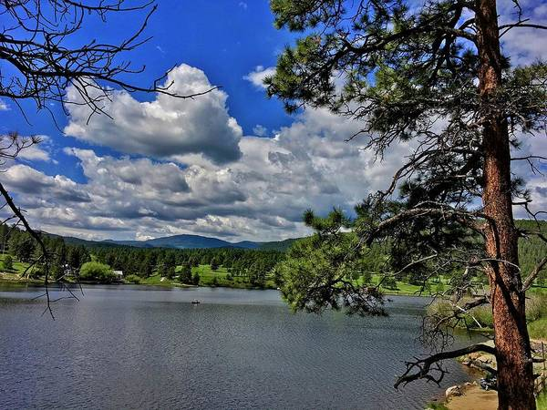 Photograph - Tall Pine At Evergreen Lake by Dan Miller
