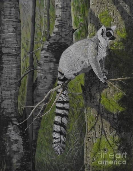 Ring-tailed Lemur Painting - Tall Tale by Fay De Jong
