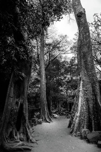 Photograph - Tall Trees At The Temple by Georgia Fowler
