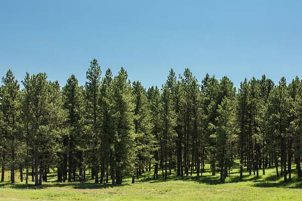Heath Photograph - Tall Trees by Todd Klassy