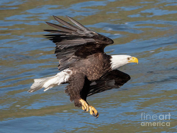 Wall Art - Photograph - Talons Ready by Mike Dawson