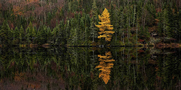 Photograph - Tamarack Defiance by Doug Gibbons