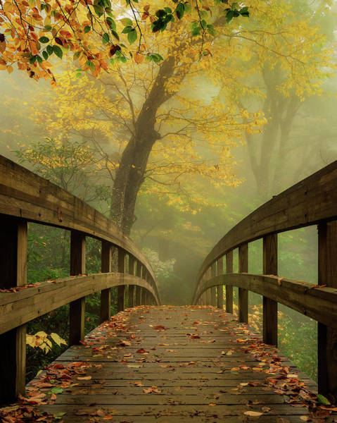 Tanawha Trail Blue Ridge Parkway - Foggy Autumn Art Print