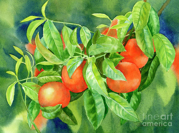 Wall Art - Painting - Tangerines With Background 2 by Sharon Freeman