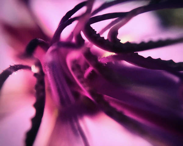 Photograph - Tangled Tentacles by Michael Van Huffel