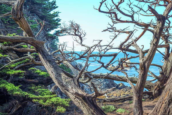 Photograph - Tangled Up In Blue by Joseph S Giacalone