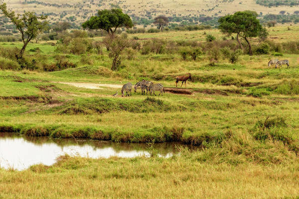 Photograph - Tanzania Animal Landscape by Kay Brewer