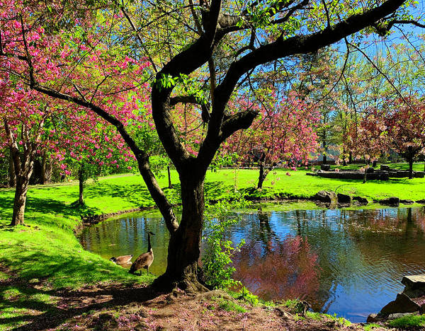 Photograph - Tappan Park Spring by Roger Bester