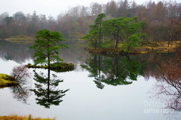 Wall Art - Photograph - Tarn Hows On A Misty Morning In December Lake District by Louise Heusinkveld