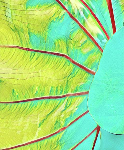 Photograph - Taro Leaf In Turquoise  by Joalene Young