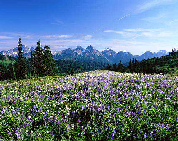 Tatoosh Range Of Mount Rainier And Art Print