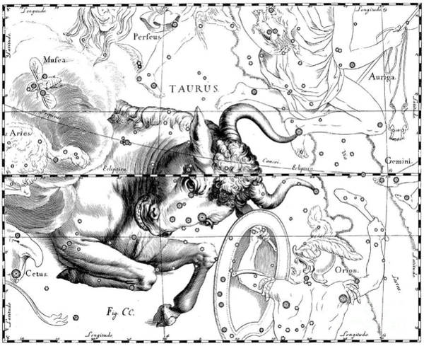 Wall Art - Drawing - Taurus, Engraving From Celestial Atlas Firmamentum Sobiescianum by Johann Hevelius