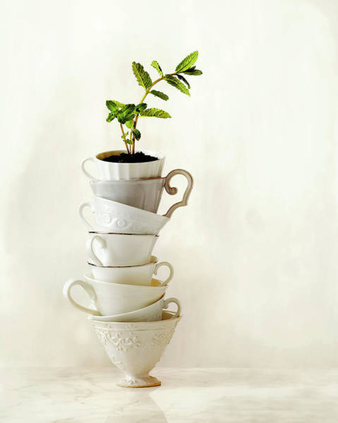 Tea Photograph - Tea Plant Growing In Stack Of Tea Cups by Annabelle Breakey