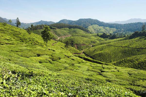 Kerala Photograph - Tea Plantation, Munnar, Idukki, Kerala by Exotica.im