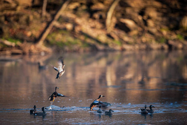 Photograph - Teal Rising by Jeff Phillippi