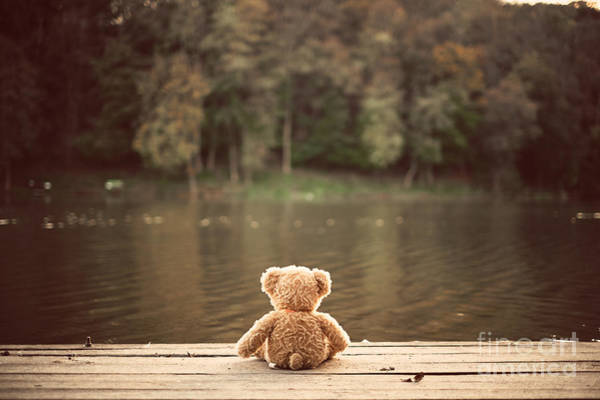 Wall Art - Photograph - Teddy Bear by Creaturart Images