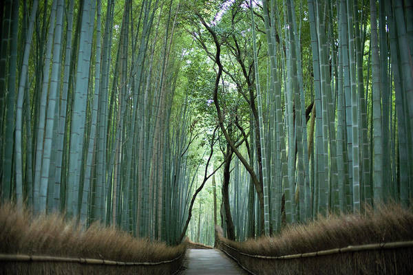 Wall Art - Photograph - Ten-ryu Temple, Bamboo Street In by Michael H