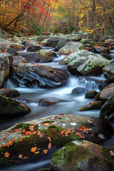 Photograph - Tennessee Autumn  by Harriet Feagin