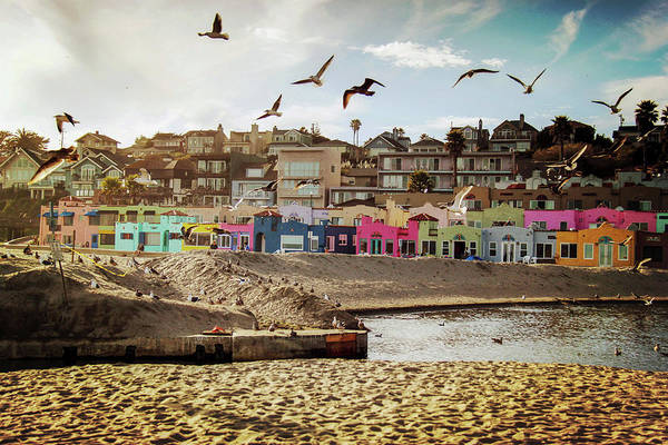 Wall Art - Photograph - Terns And Colorful Houses On Capitola by Lingxiao Xie