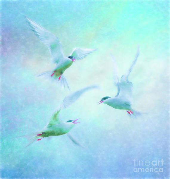 Photograph - Terns Squabbling by Brian Tarr