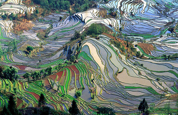 Agriculture Photograph - Terrace Rice Field At Yuanyang by Jialiang Gao