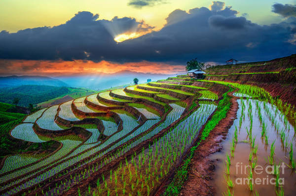 Terraced Paddy Field In Mae-jam Village Art Print