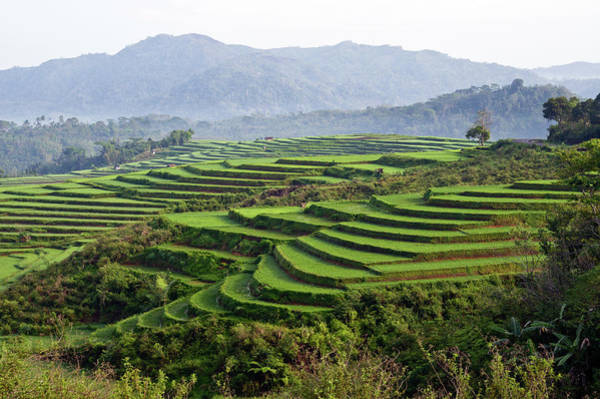 Flores Photograph - Terraces Of Rice Paddy Field by Tristan Savatier