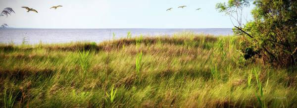 Wall Art - Photograph - Terrapin Nature Pk Shore Grass Pano by Brian Wallace