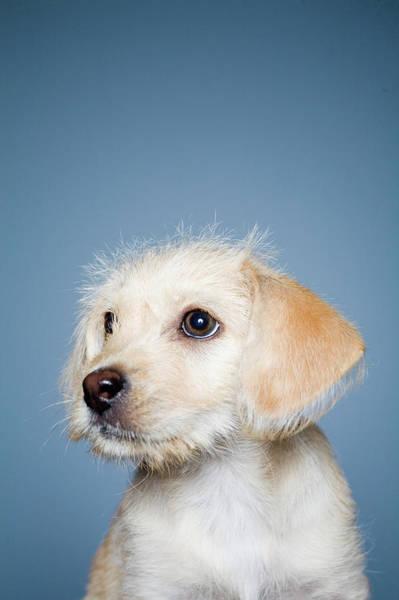 Wall Art - Photograph - Terrier Puppy by Joe Toreno
