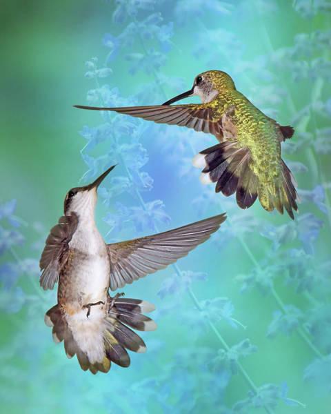 Wall Art - Photograph - Territorial Dispute - Hummingbirds by Nikolyn McDonald