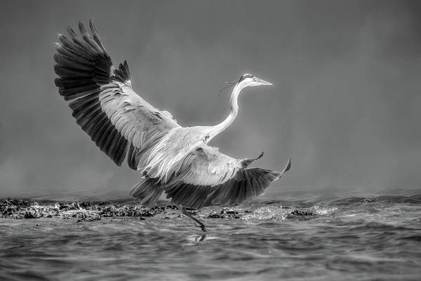 Wall Art - Photograph - Testing The Waters - B W by Donna Kennedy