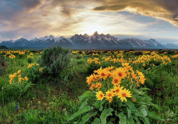 Photograph - Teton Spring by Leland D Howard