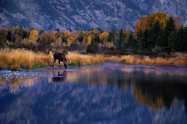 Photograph - Tetons Moose And Lakeshore In Autumn by David Chasey