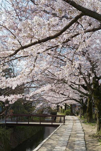 Shadow Photograph - Tetsugakunomichi, Kyoto Prefecture by Daj