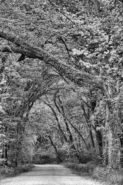 Photograph - Texas Backroad Tunnel Black And White by JC Findley