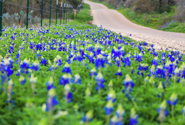 Photograph - Texas Bluebonnet Road by Dan Sproul