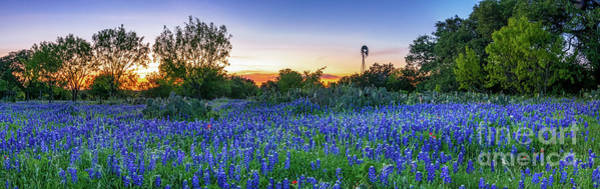 Wall Art - Photograph - Texas Bluebonnet Sunset Landscape Pano 2 by Bee Creek Photography - Tod and Cynthia