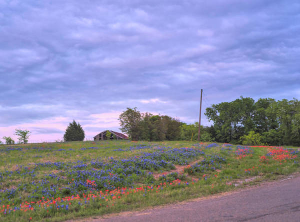 Photograph - Texas Bluebonnets 8 by Andrea Anderegg