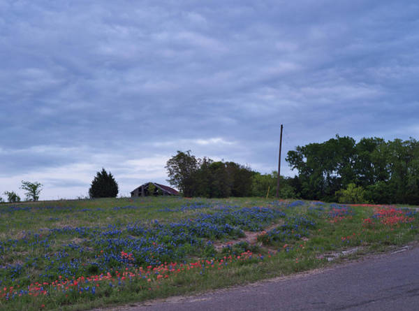 Photograph - Texas Bluebonnets by Andrea Anderegg