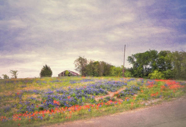 Photograph - Texas Bluebonnets Textured  by Andrea Anderegg