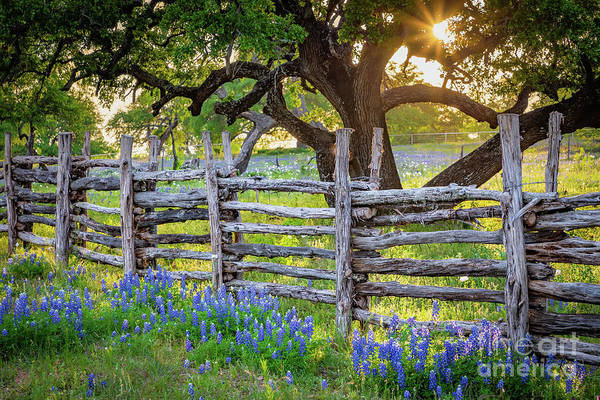 Photograph - Texas Fence by Inge Johnsson