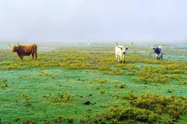 Photograph - Texas Foghorns by Erich Grant
