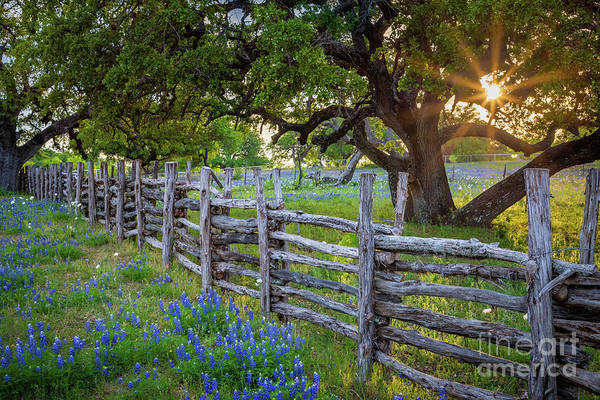 Wall Art - Photograph - Texas Hill Country Fence by Inge Johnsson