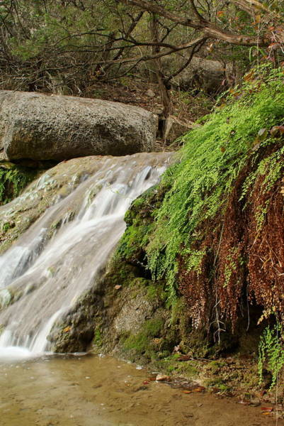 Cedar Tree Photograph - Texas Hill Country Waterfall And Ferns by Igermz