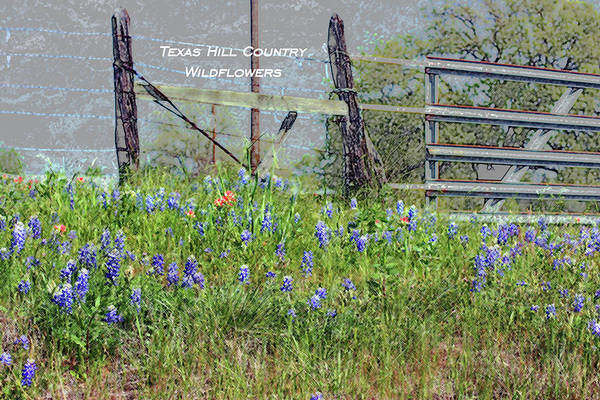 Texas Bluebonnet Digital Art - Texas Hill Country Wildflowers by Ellen O'Reilly