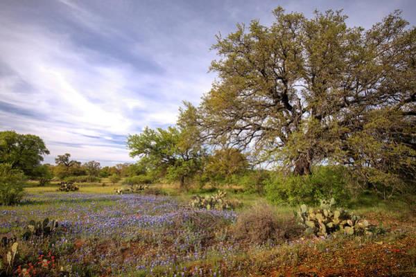 Photograph - Texas Landscape  by Harriet Feagin